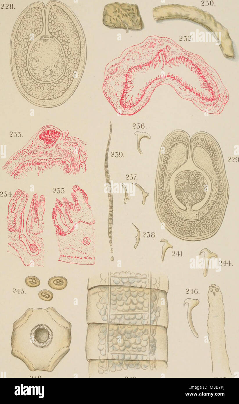 Diseases and enemies of poultry (1897) (14750642842) - Stock Image