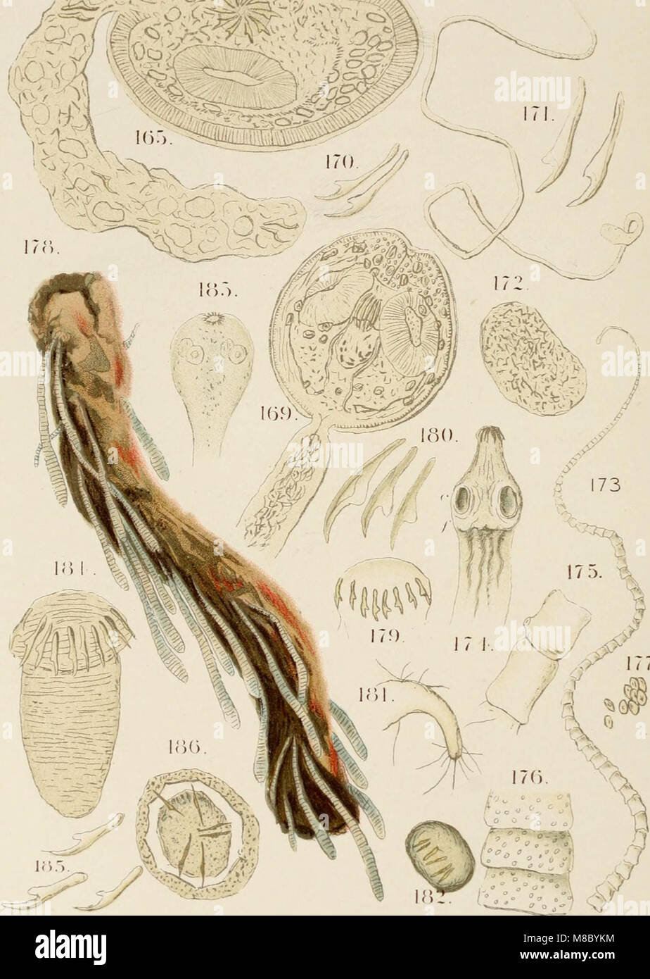 Diseases and enemies of poultry (1897) (14750644822) - Stock Image
