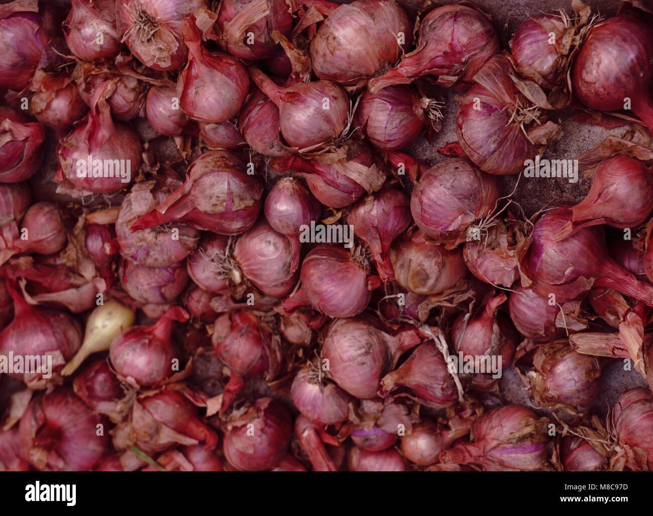 Red onions in plenty - Stock Image