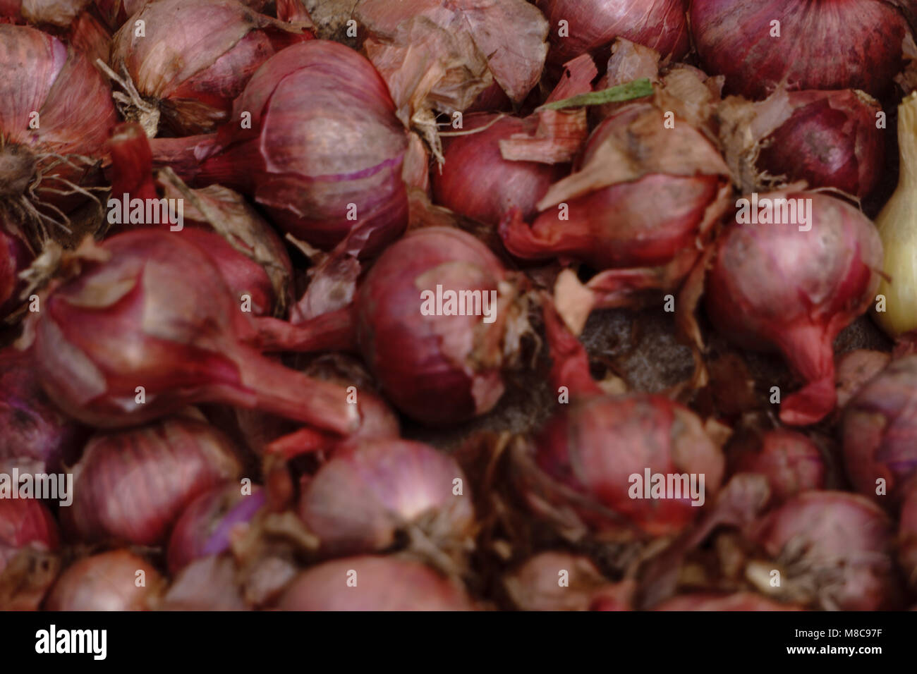 Red onions in plenty - Stock Image