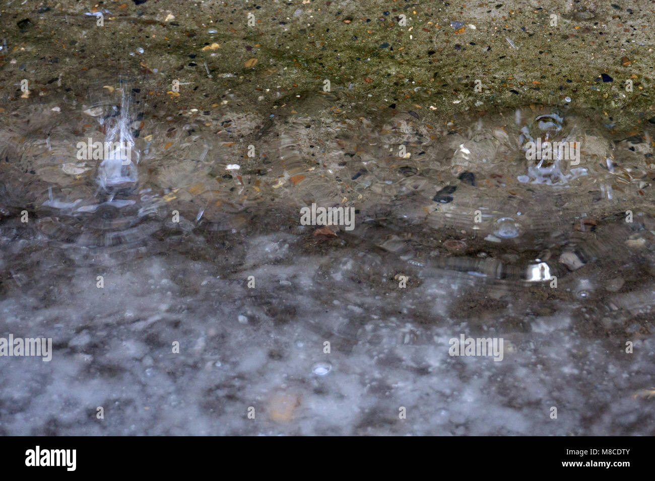 A rain in the winter. The snow is thawing - Stock Image