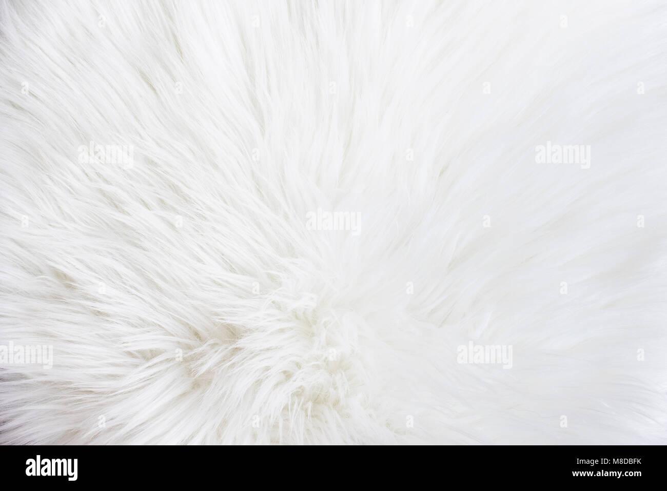White fur texture - Stock Image