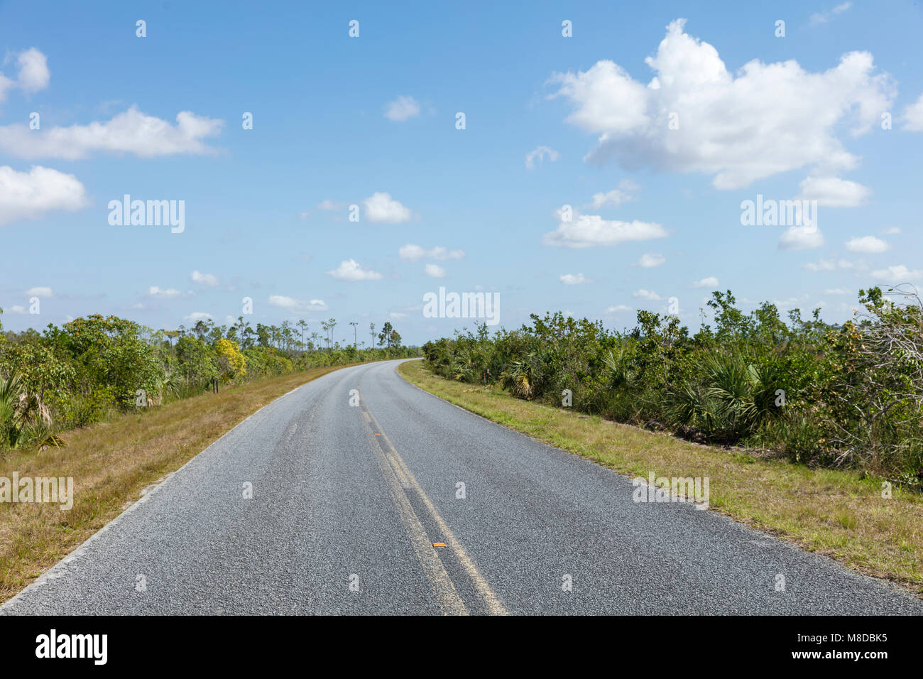 A view of Road 9336 that crosses from North to South The Everglades National Park. It provides visitors easy access - Stock Image