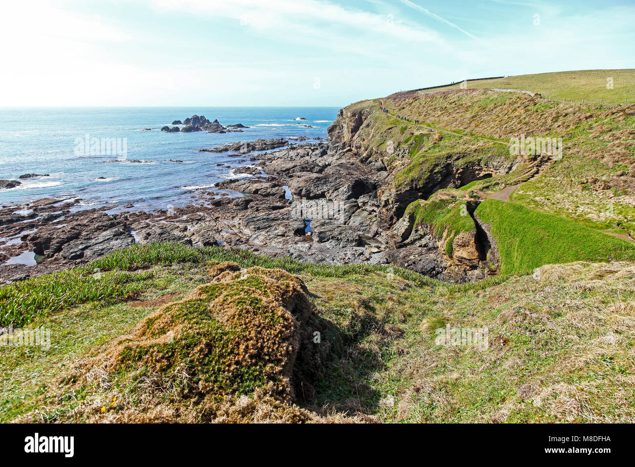 The South West Coast Path near to Pistil Meadow on the Lizard Peninsula, Cornwall, South West England, UK Stock Photo