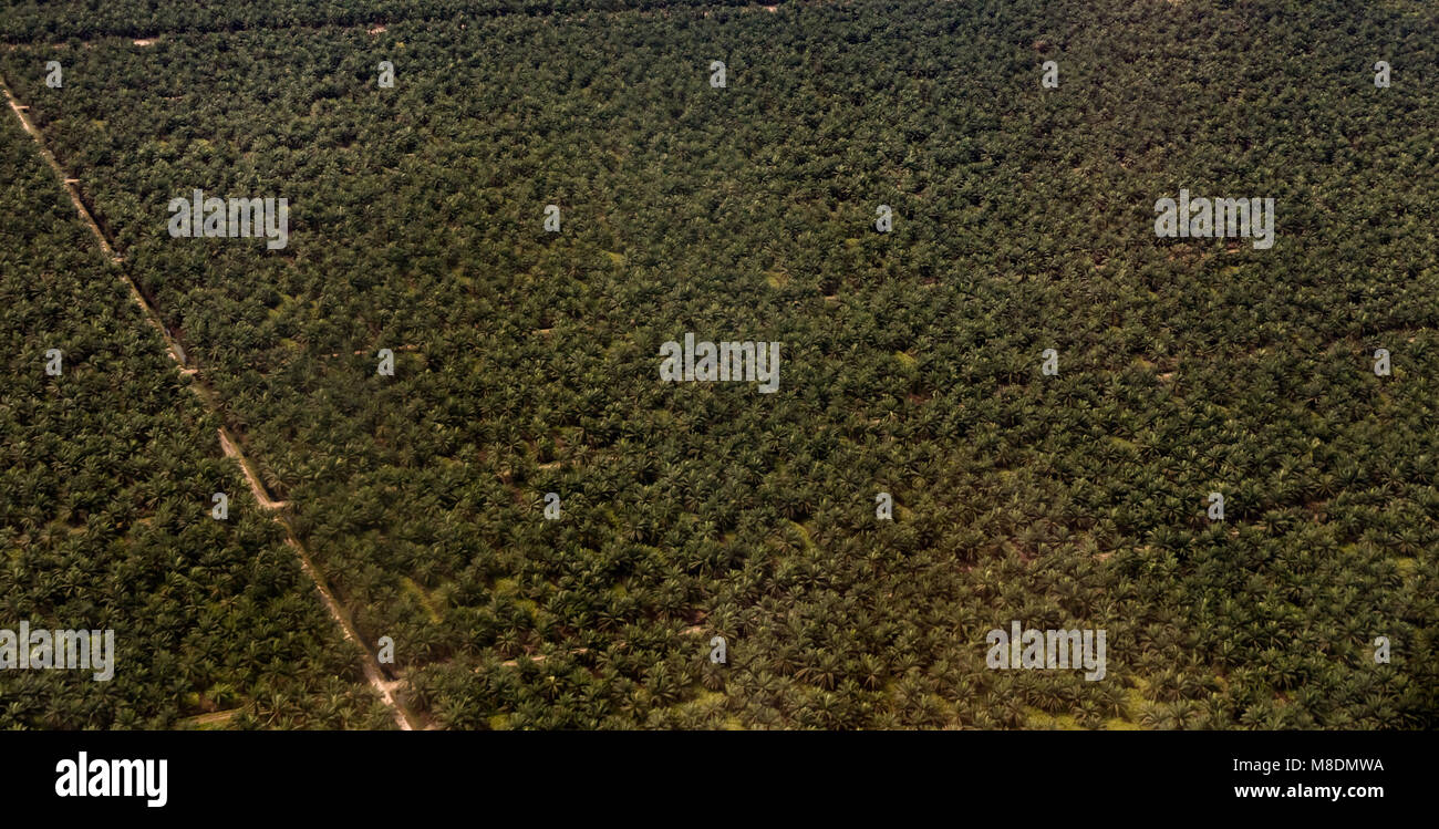 Arial image of an oil palm (Elaeis guineensis) plantation in Malaysia. Taken in February 2018. - Stock Image