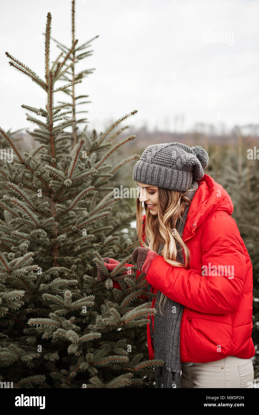 Young woman looking at pine needles while shopping for christmas tree from forest - Stock Image