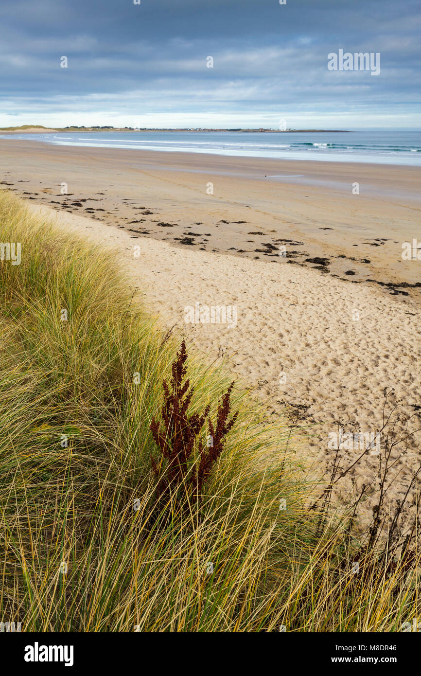 Beadnell Bay, Northumberland, from St Oswald's Way coastal path. - Stock Image