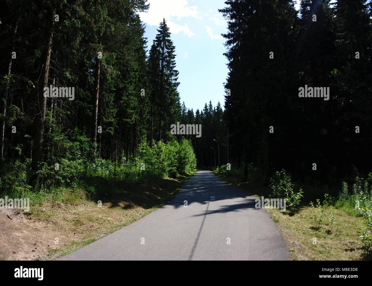 Asphalt road in green forest - Stock Image