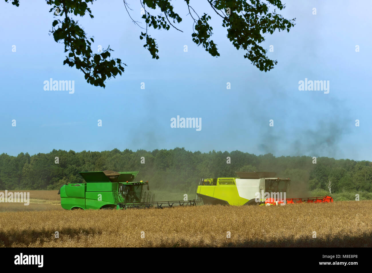 two agricultural machines operate in the field, agricultural land, ain harvesting machines operate in the field - Stock Image