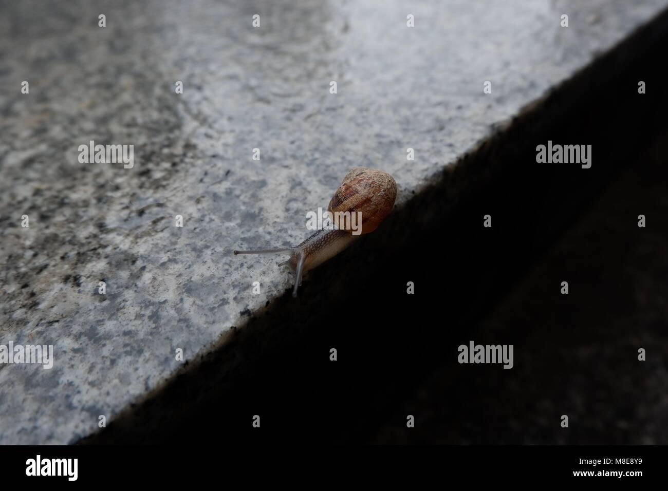 slow life Stock Photo