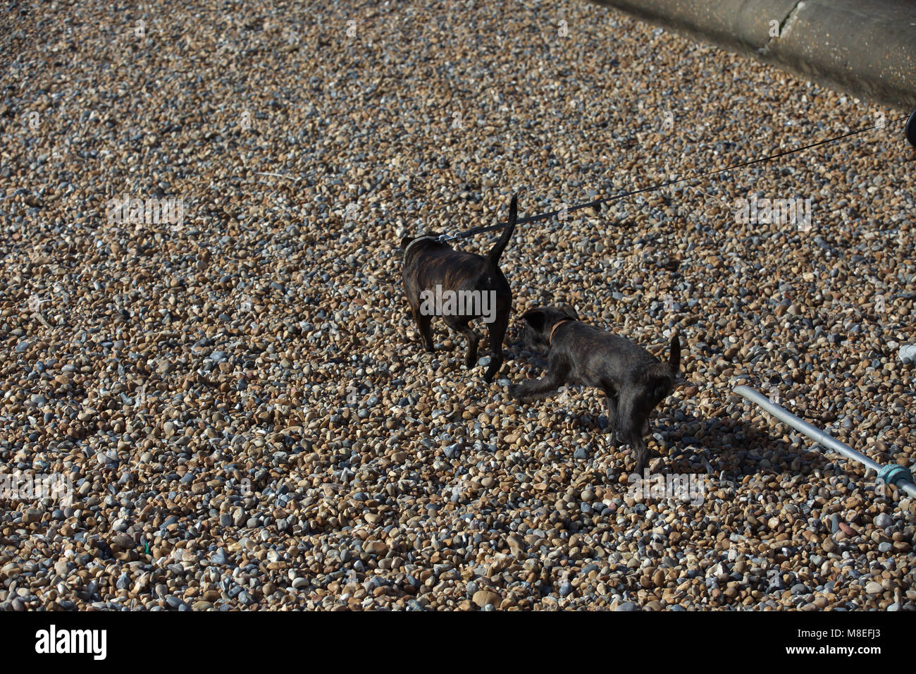 Brighton,UK,16th March 2018,Dogs walk on the beach in Brighton.credit Keith Larby/Alamy Live News - Stock Image