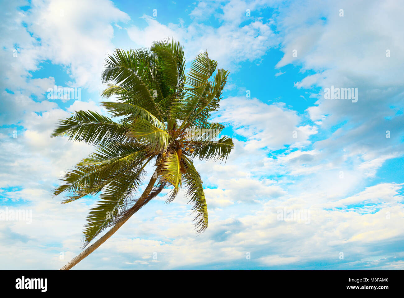 Tilted coconut palm on background the blue sky with white clouds. - Stock Image