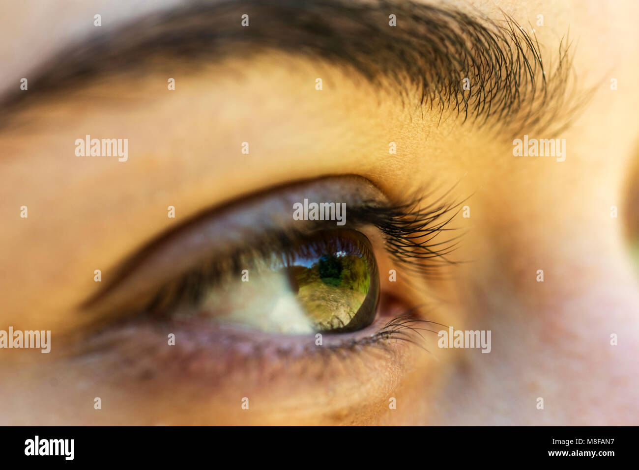 The brown eye of a girl reflecting the green field - Stock Image