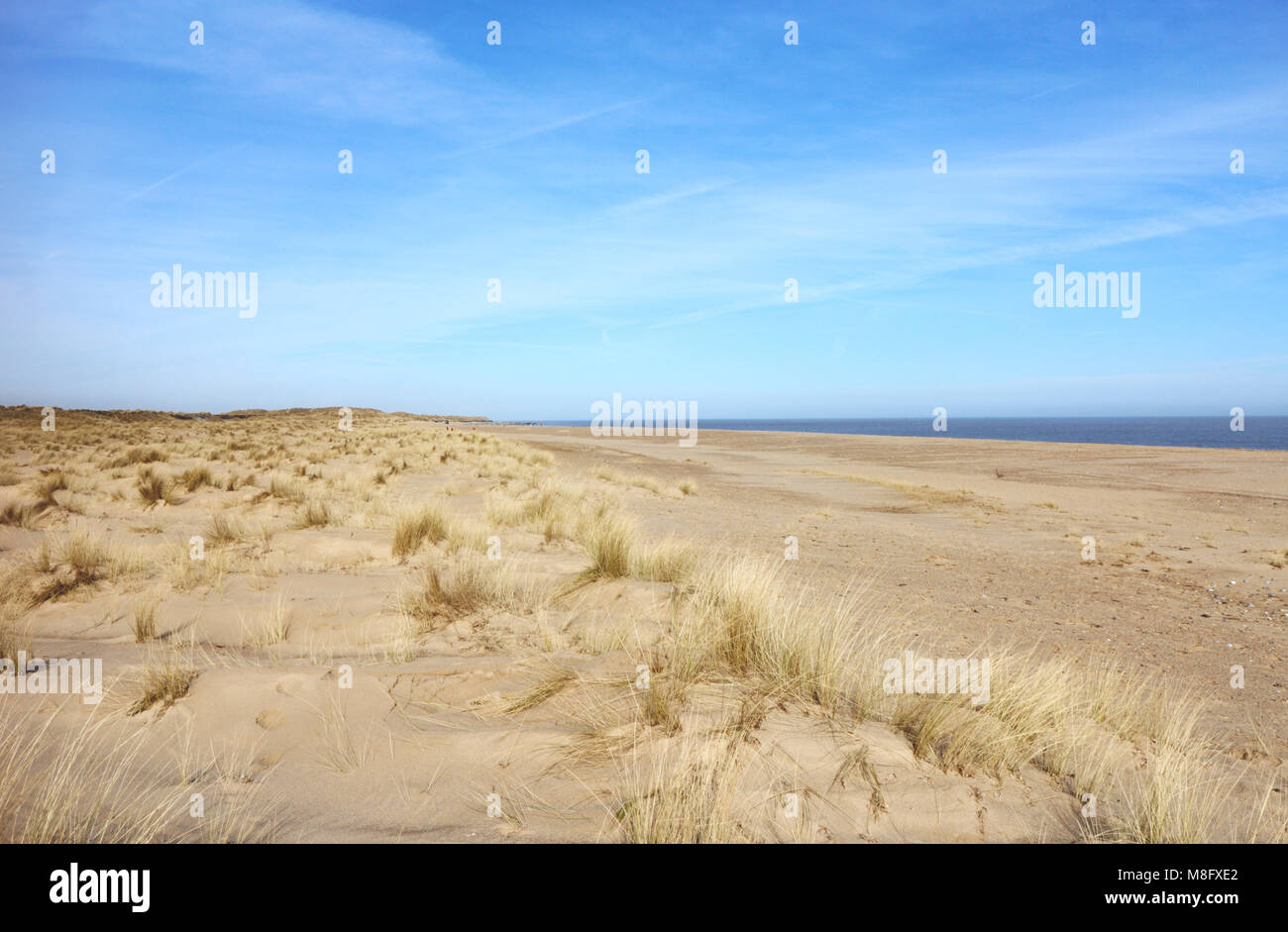 A view of primary dune formation and development on the East Norfolk coast at Winterton-on-Sea, Norfolk, England, - Stock Image