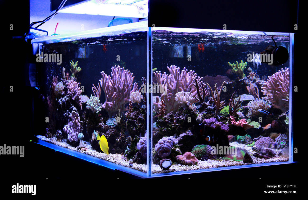 Saltwater coral reef aquarium tank - Stock Image
