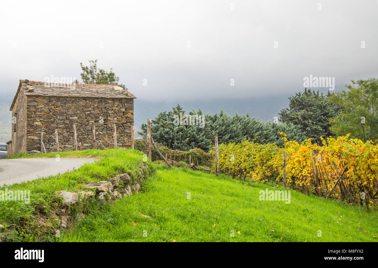 The stone house with the vineyard in autumntime, Italy. - Stock Image