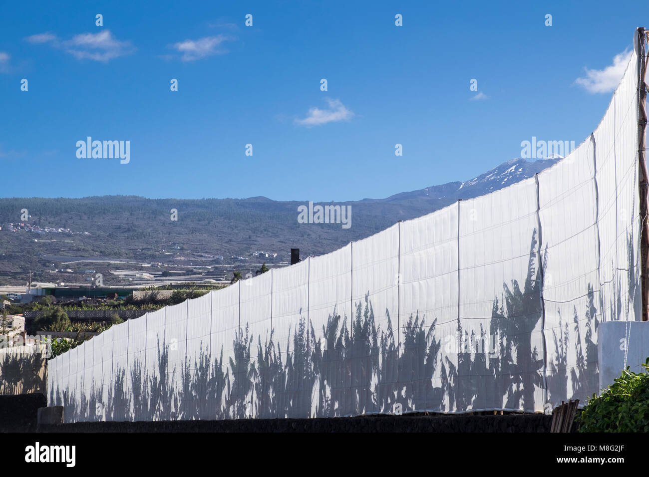 Shadows of banana plants on a white netting fence around a plantation, with blue sky and a snow capped mount Teide - Stock Image