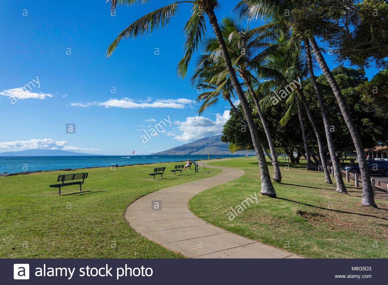 Palm trees line the seafront promenade in Kalama Park in Kihei island of Maui in the state of Hawaii USA - Stock Image