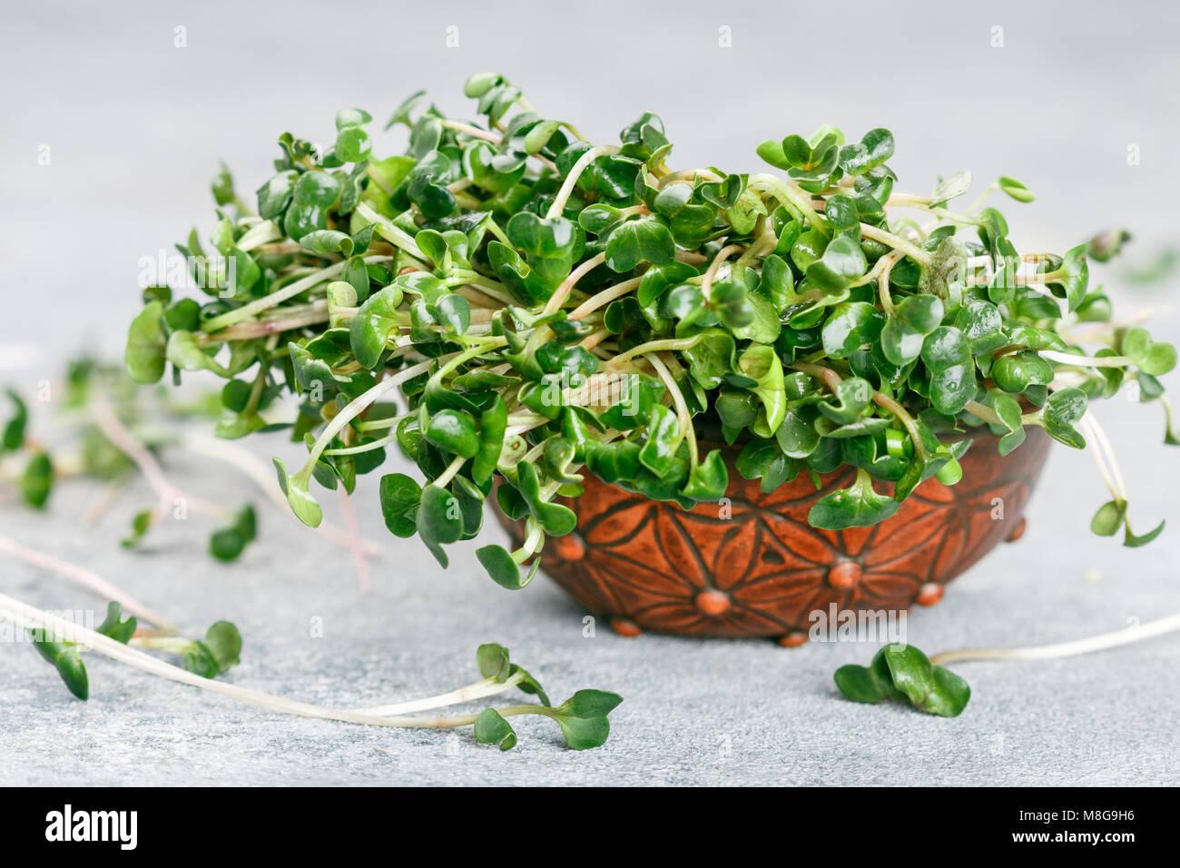 Raw Green Organic radish or daikon Microgreens for making fresh salads. detox, diet. seedlings. Concept and healthy Stock Photo