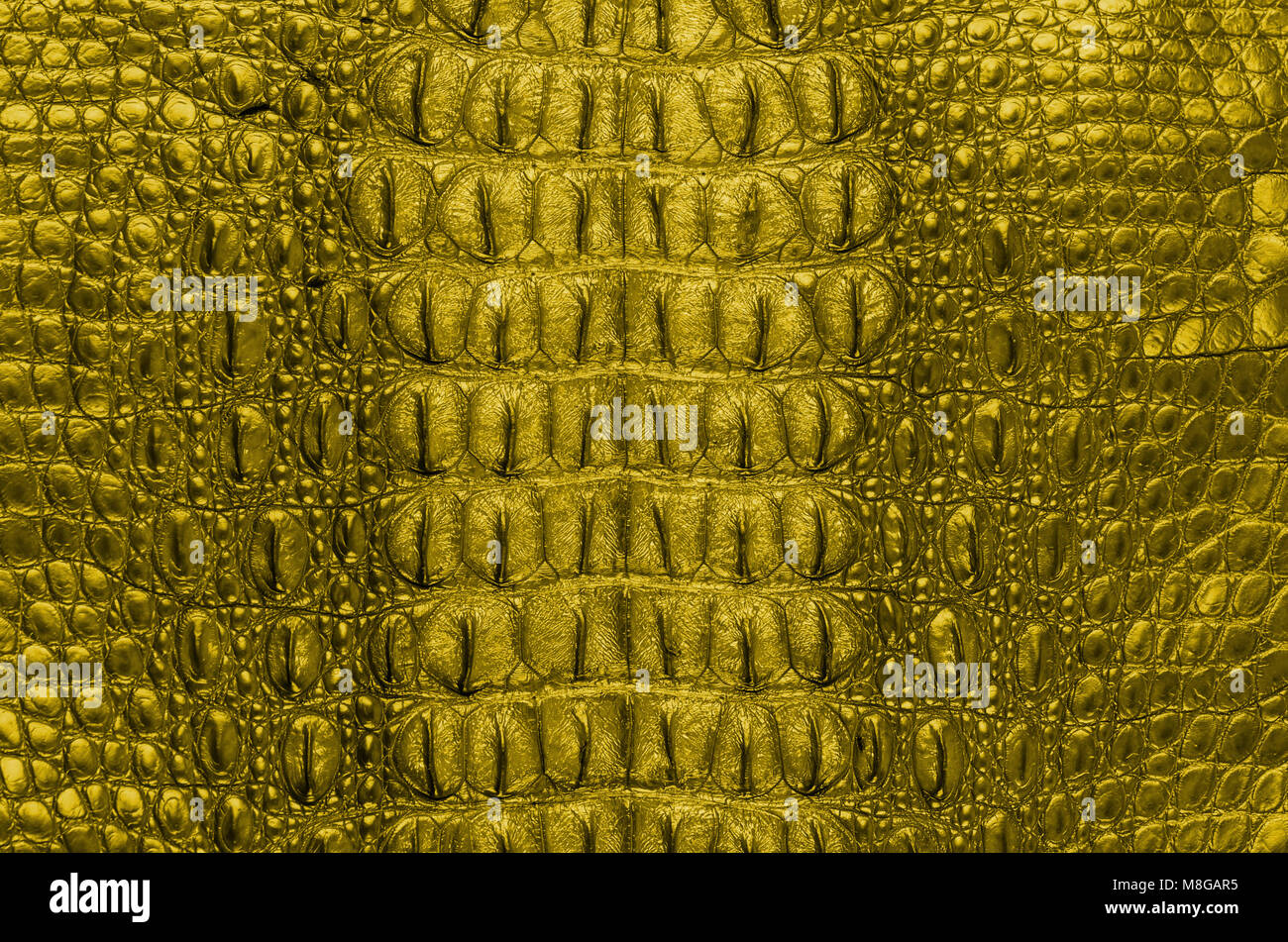Snake Print Bag Stock Photos & Snake Print Bag Stock Images - Alamy