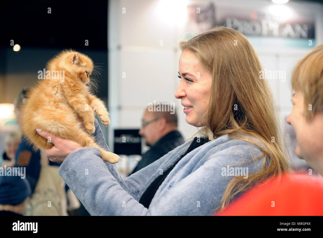 Woman holding a pedigreed kitten and looking at it. Competition among the largest cats in Ukraine. March 3, 2018.Kiev, - Stock Image