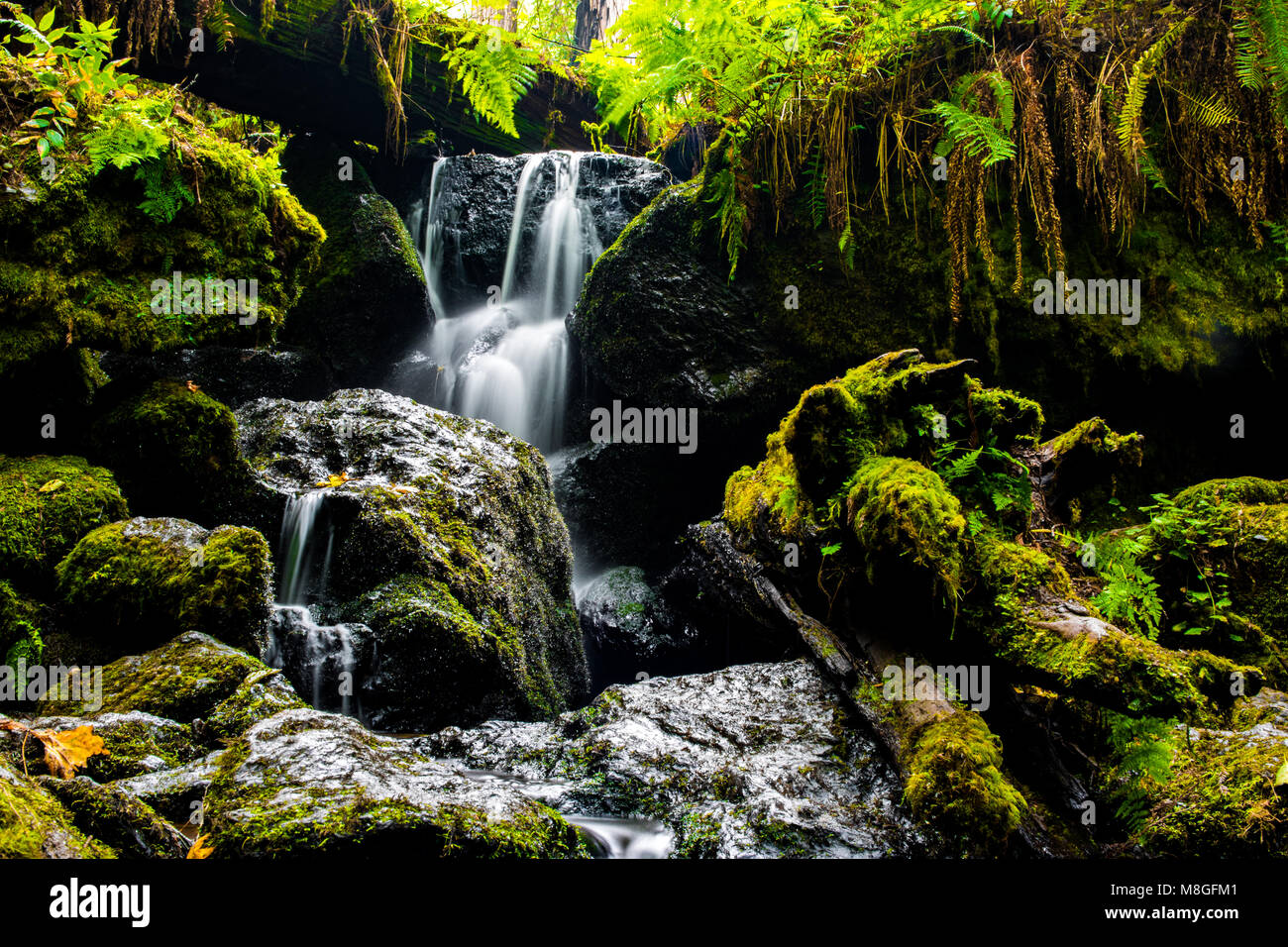 Small Forest Stream Waterfall - Stock Image