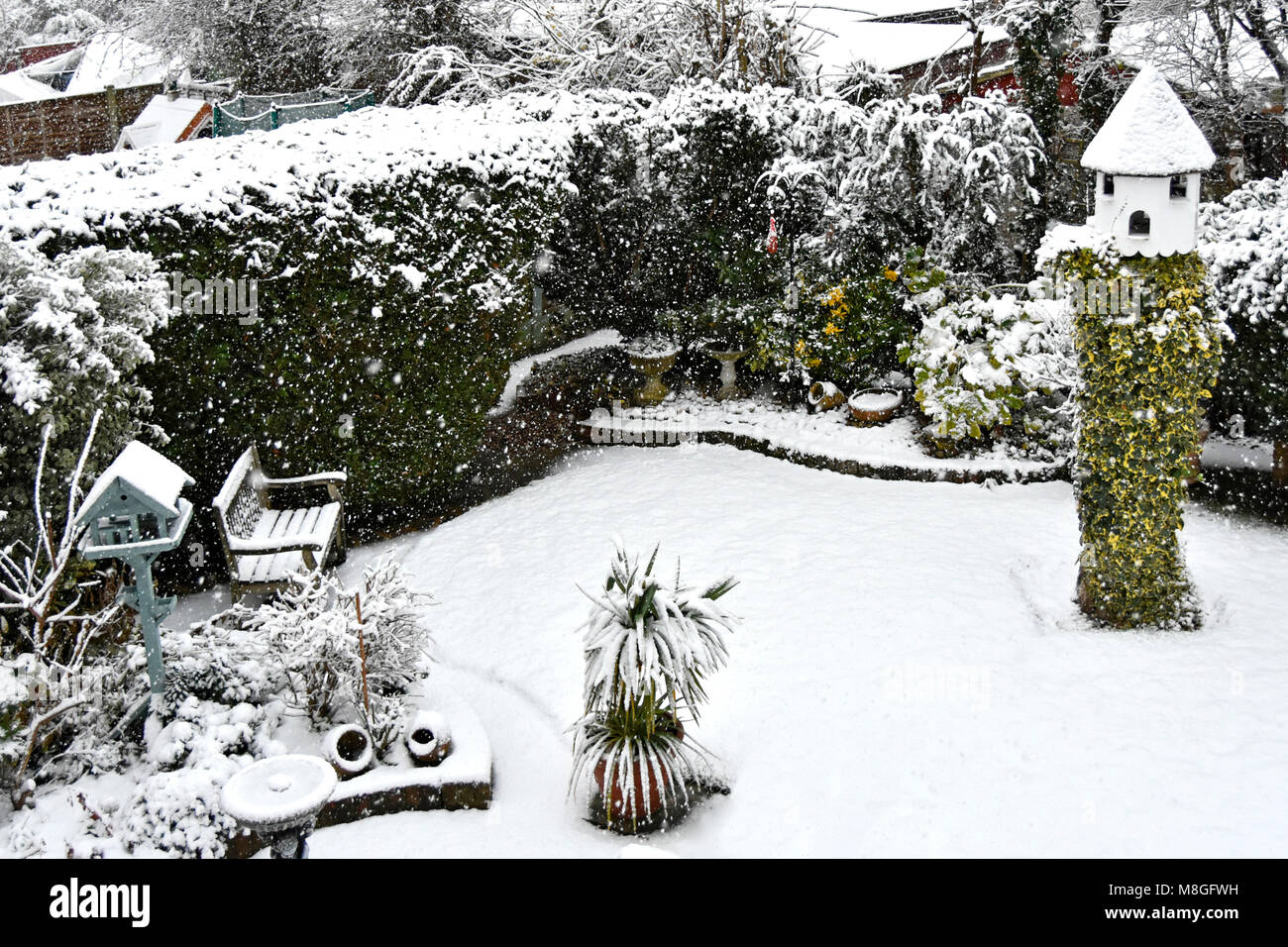 View from above  looking down on back garden grass lawn conifer hedge & flower beds falling winter snow ivy - Stock Image