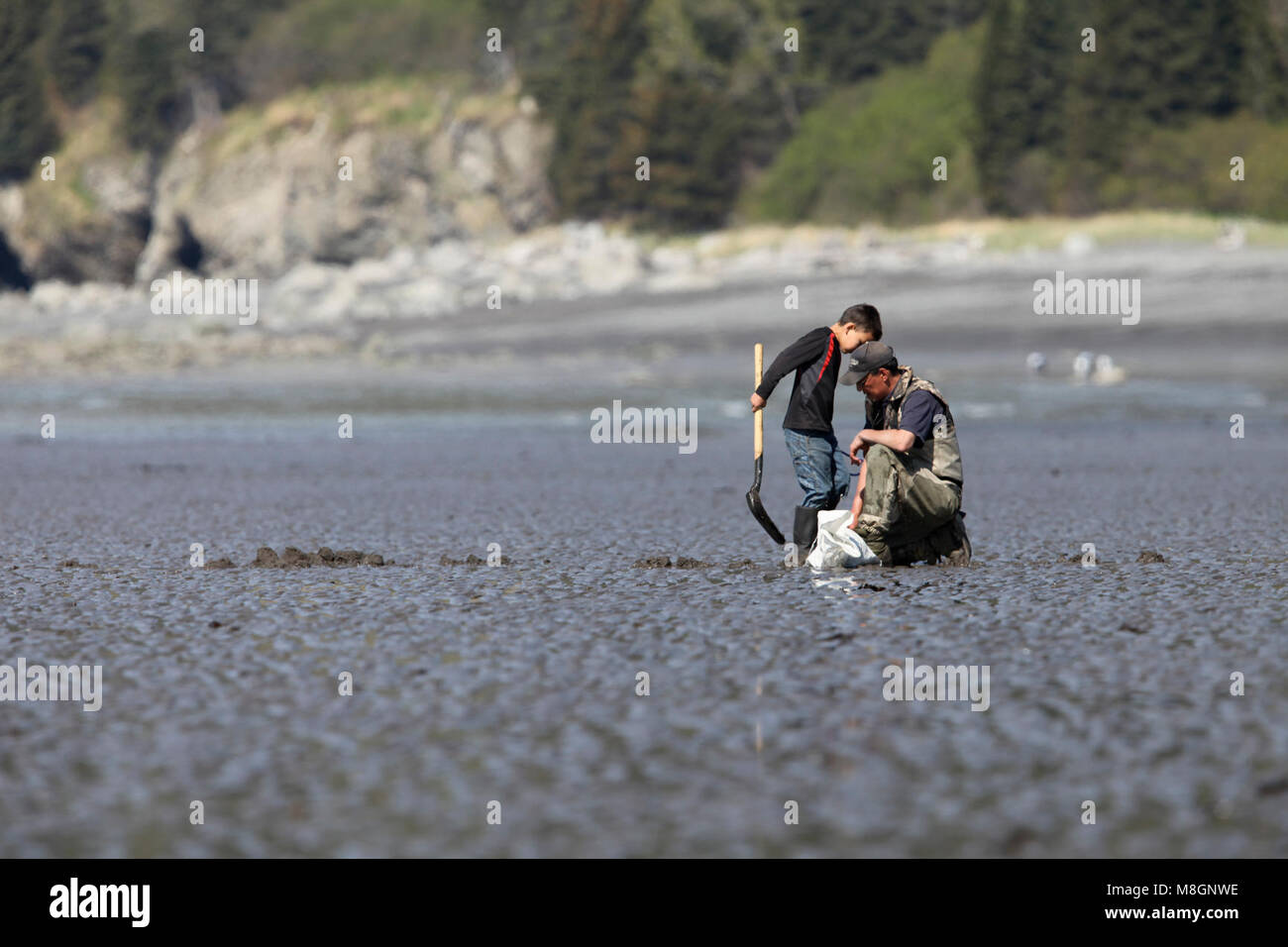 Clamming   .A child and parent clam on the mud flats at Chinitna Bay - Stock Image