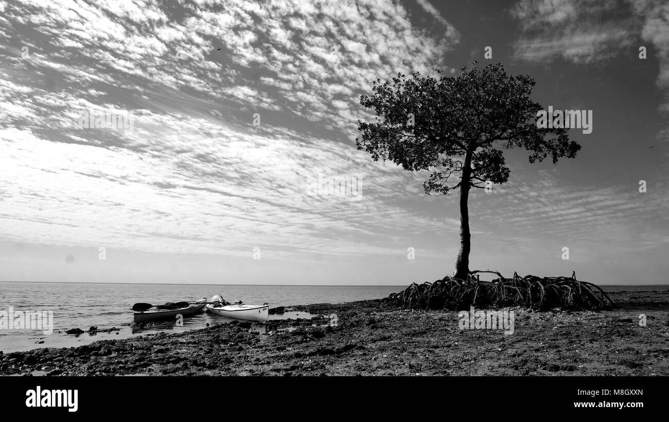 EVER near Jewel Key   . - Stock Image