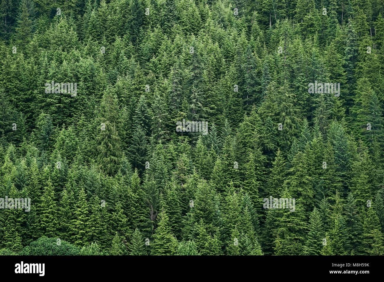 Boreal forest, Alaska, USA. - Stock Image