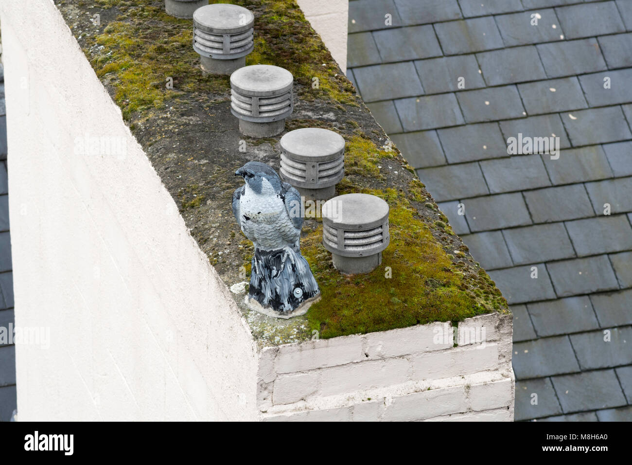 Decoy replica bird of prey on top of building as a pigeon deterrent, north east England, UK - Stock Image
