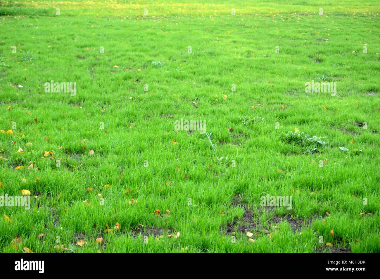 grassy background.html
