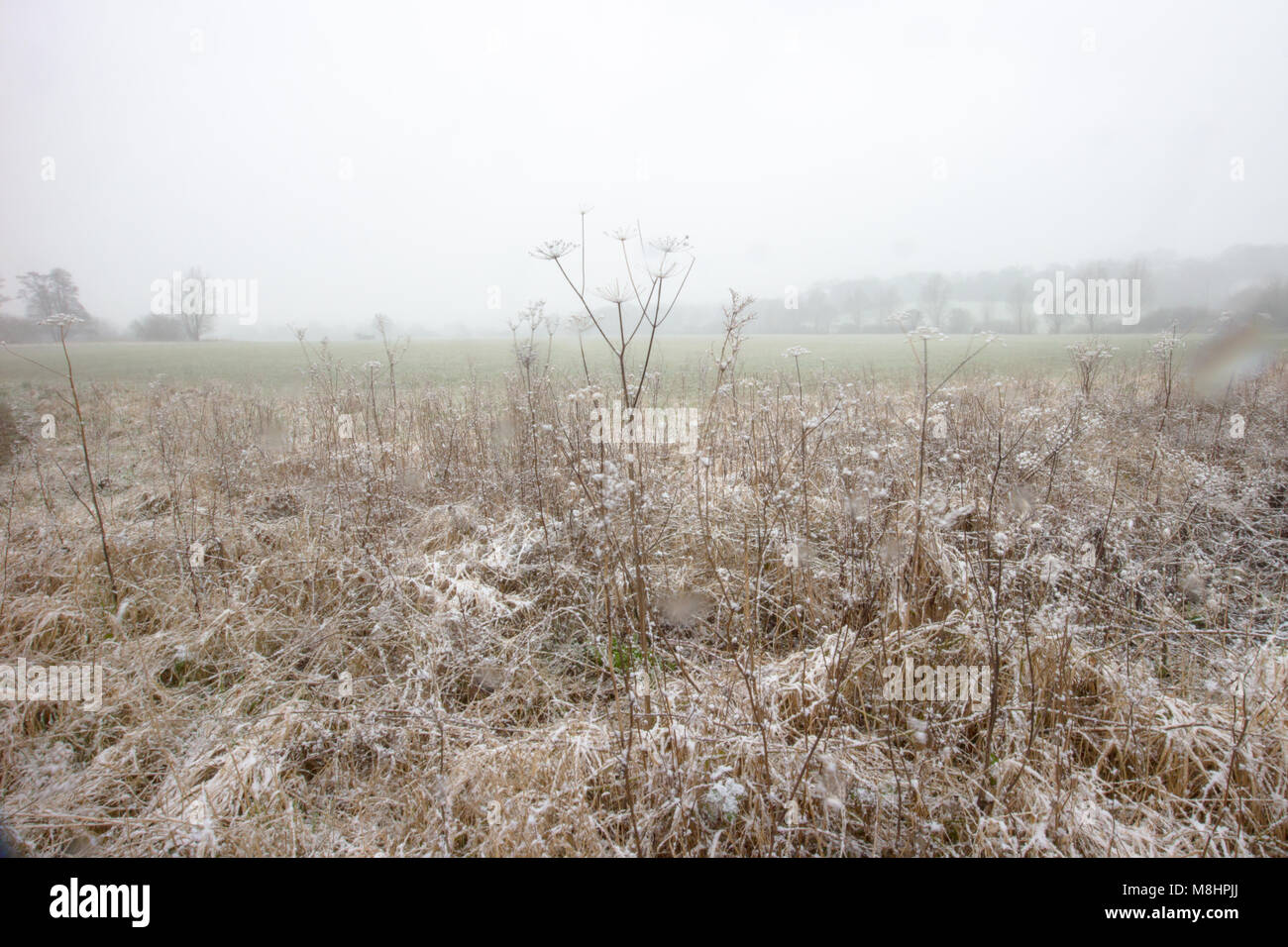 Tunbridge Wells sees a light dusting of snow on St Patricks day 2018 with a misty overcast day with limited visibility - Stock Image