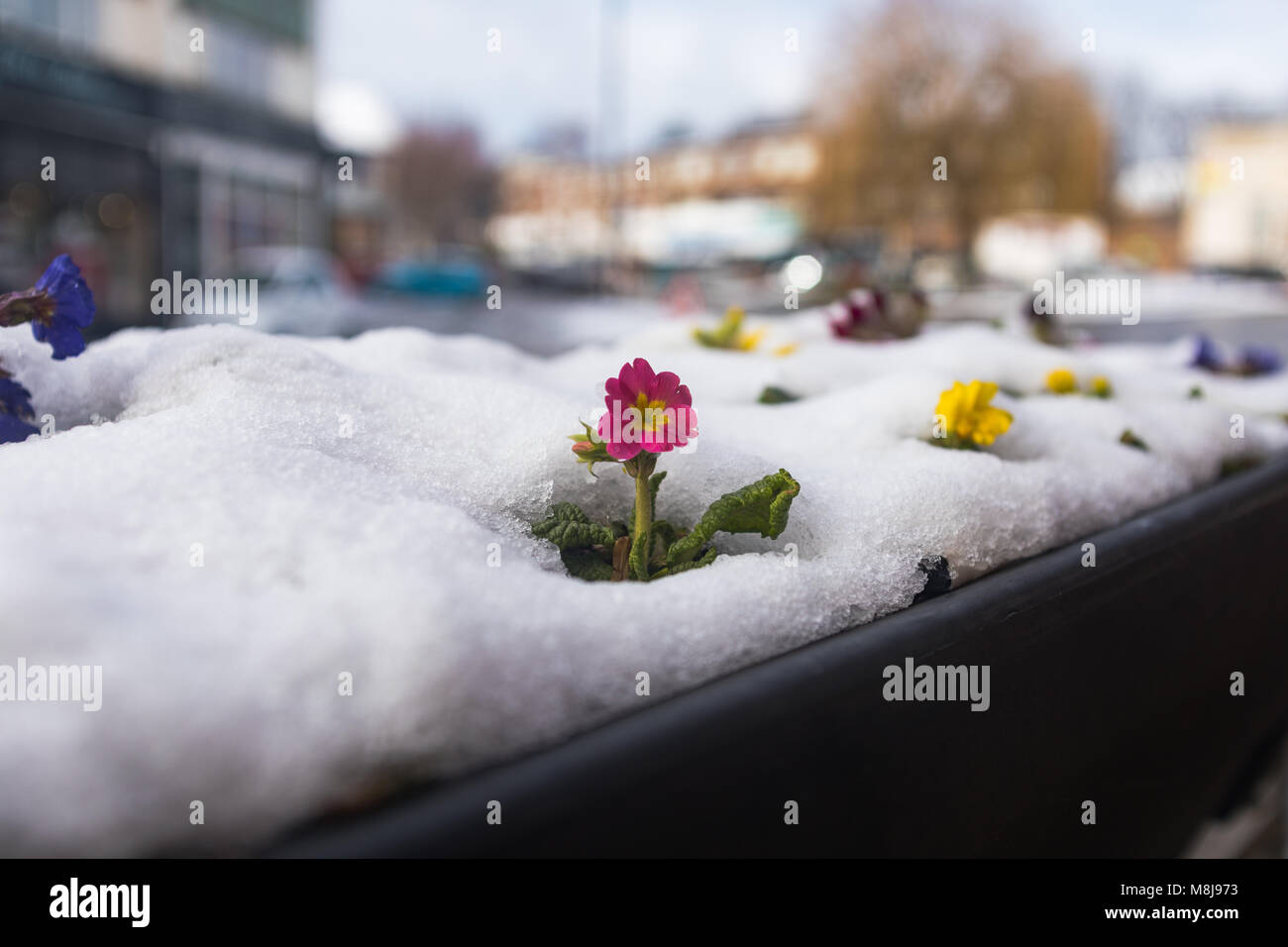 A confused flower - Stock Image