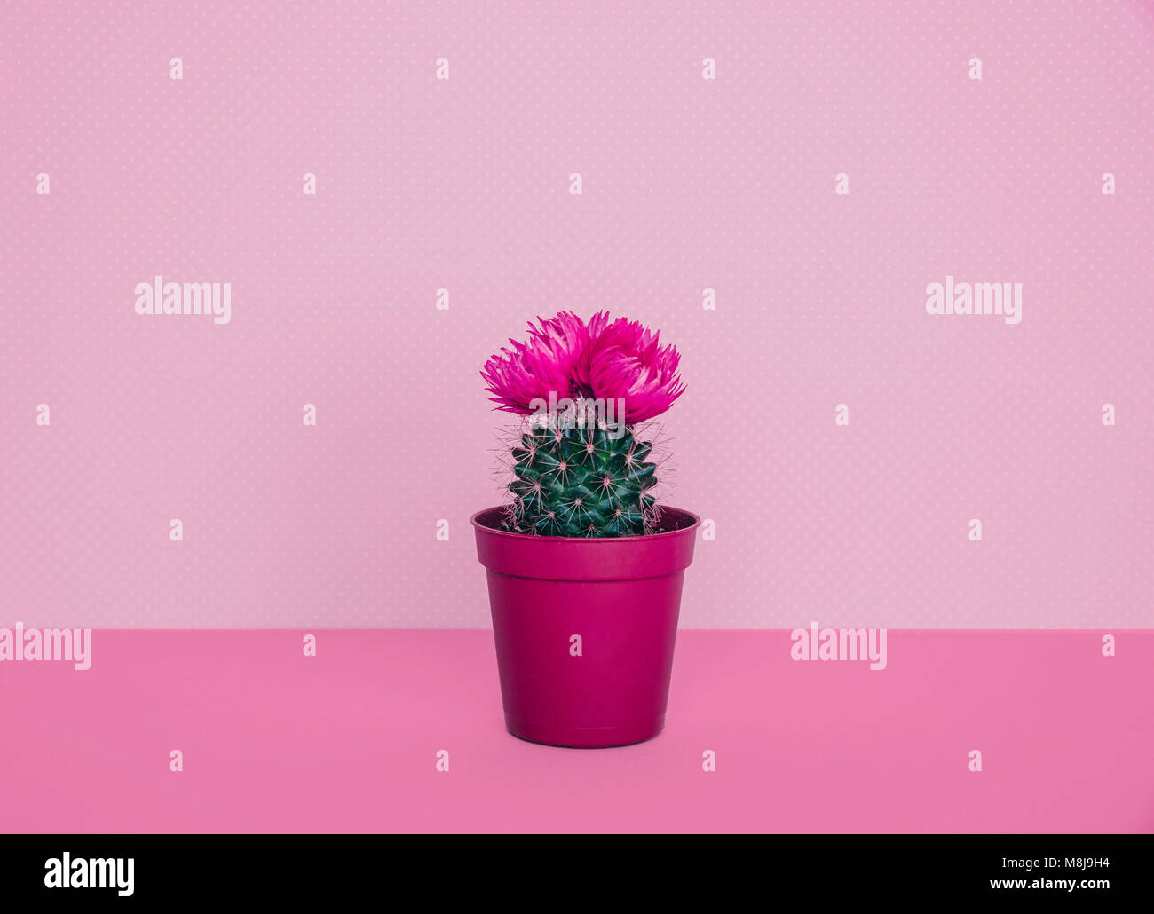 Small cactus in a flowerpot on a trendy background creative minimal small cactus in a flowerpot on a trendy background creative minimal stock photo 177423600 alamy mightylinksfo Images