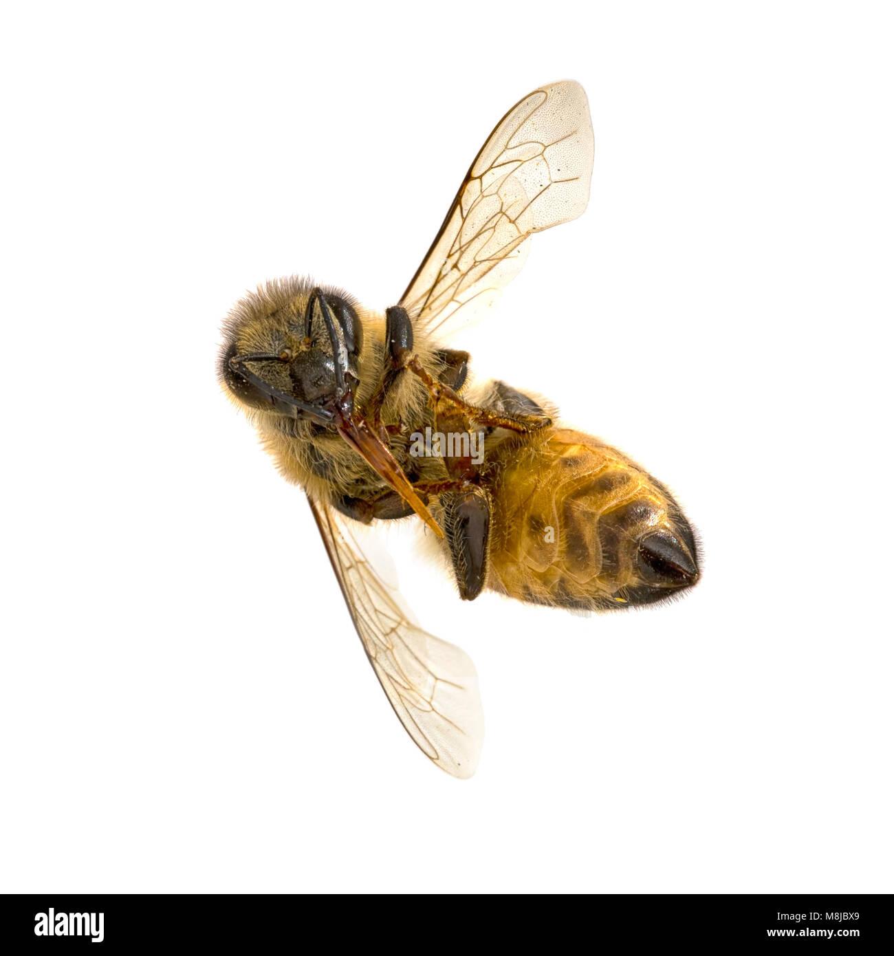 Natural history insect macro. - Stock Image