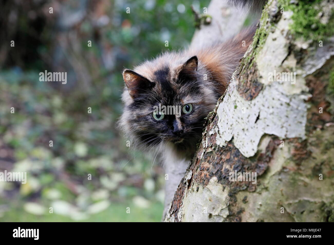 Cat Lamplight Eyes