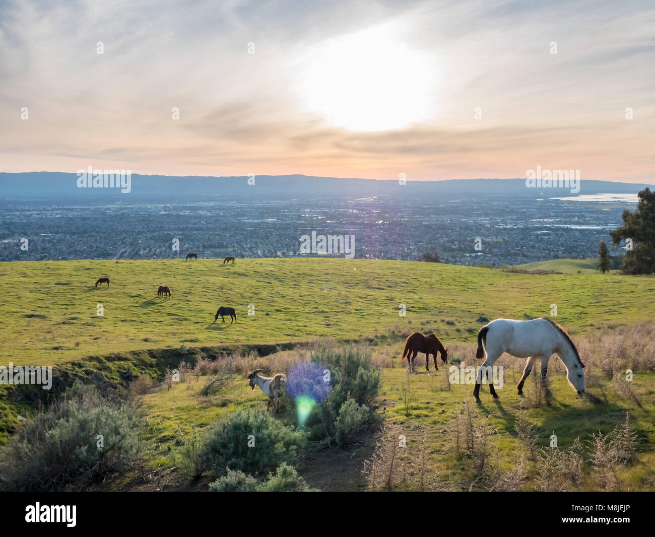 Houses on Green Grass with Silicon Valley in the Background at Sunset - Stock Image