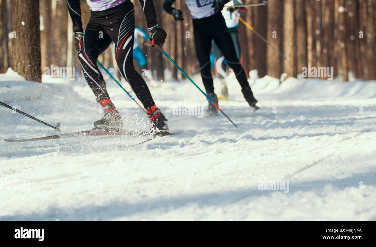 Ski competition - legs of sportsmen running on snowy sunny forest - Stock Image