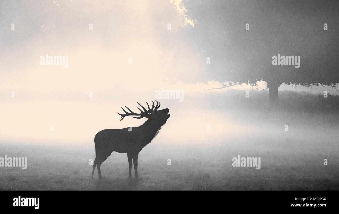 A silhouetted Stag stands barking as the sun slowly burns off the early morning mist in London's famous Richmond Stock Photo