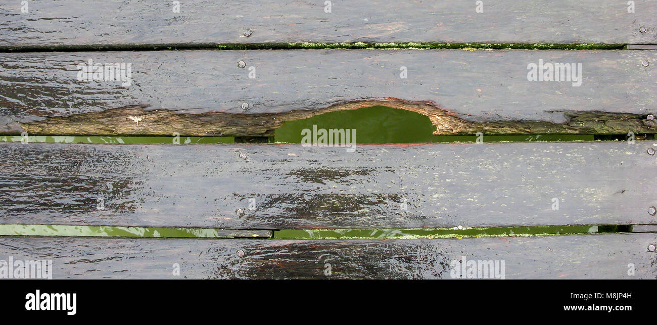 Brighton Pier's damaged wet reflective oak boardwalk reveals the green sea swirling below - Stock Image