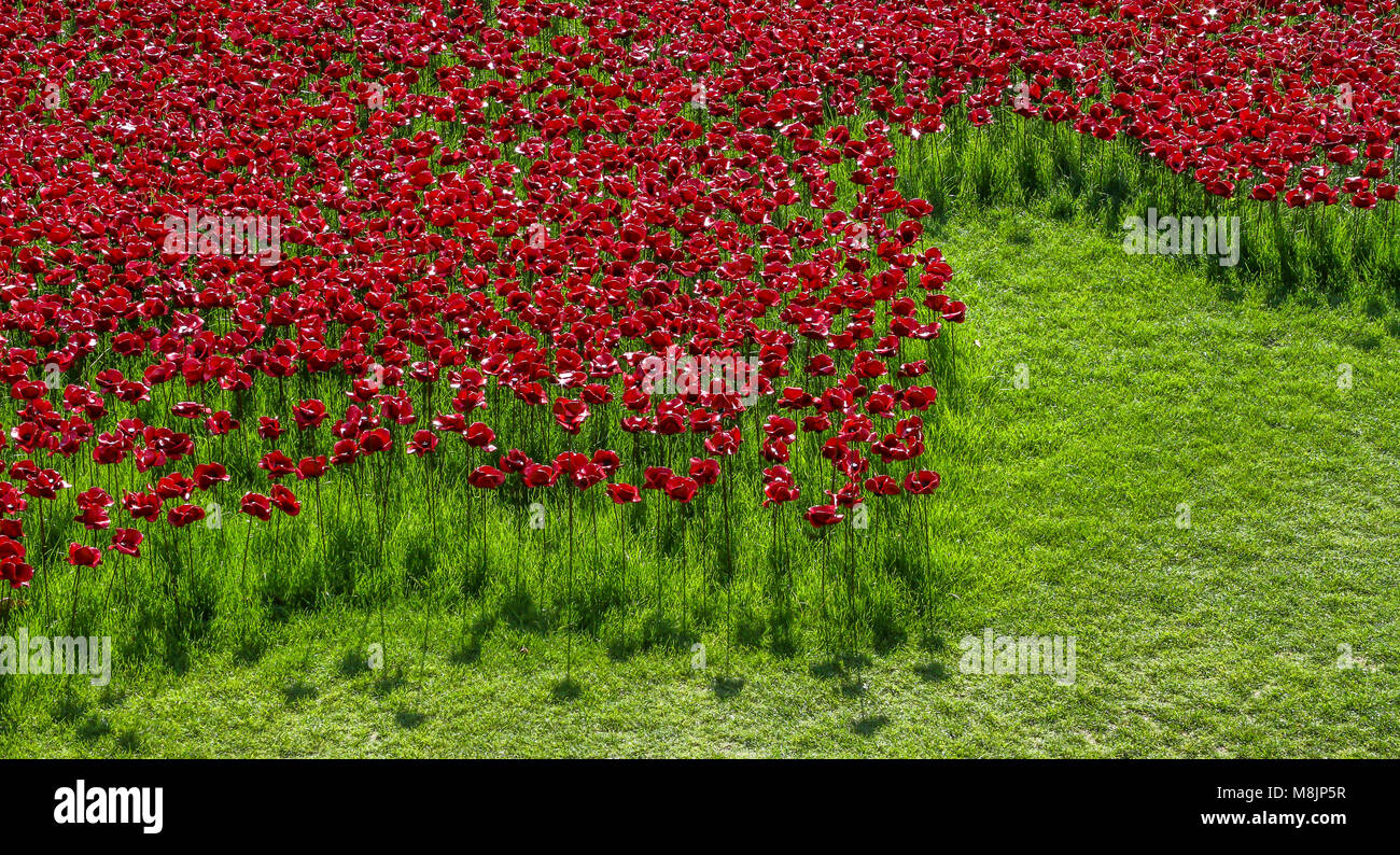 Blood Swept Lands and Seas of Red by Paul Cummins is an art installation commemorating 888,246 who died in World - Stock Image