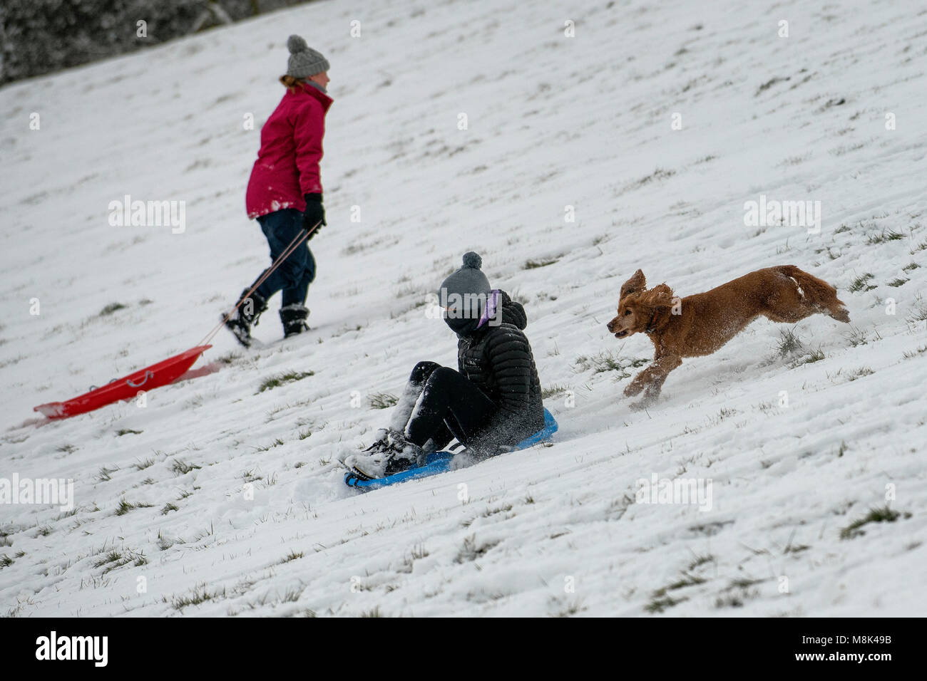 A group of children enjoy the conditions sledging on a hill in the St Catherine's Valley just outside Bath in - Stock Image