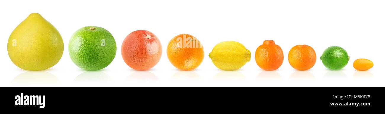 Isolated citrus fruits in a row. Pomelo, white and pink grapefruits, orange, lemon, clementine, tangerine, lime - Stock Image