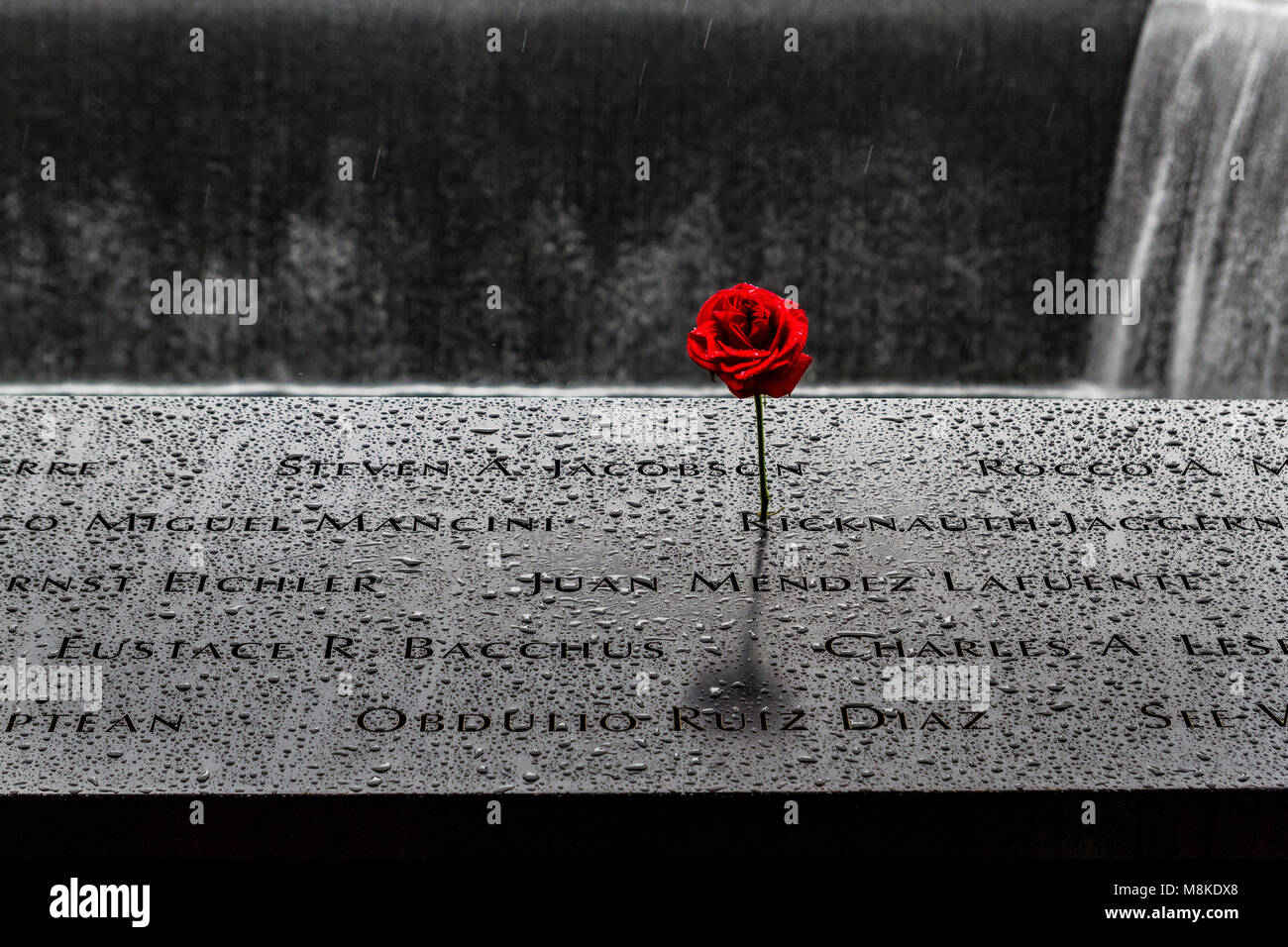 A single red rose placed on the North memorial pool at The National September 11 Memorial,a bronze panel around - Stock Image