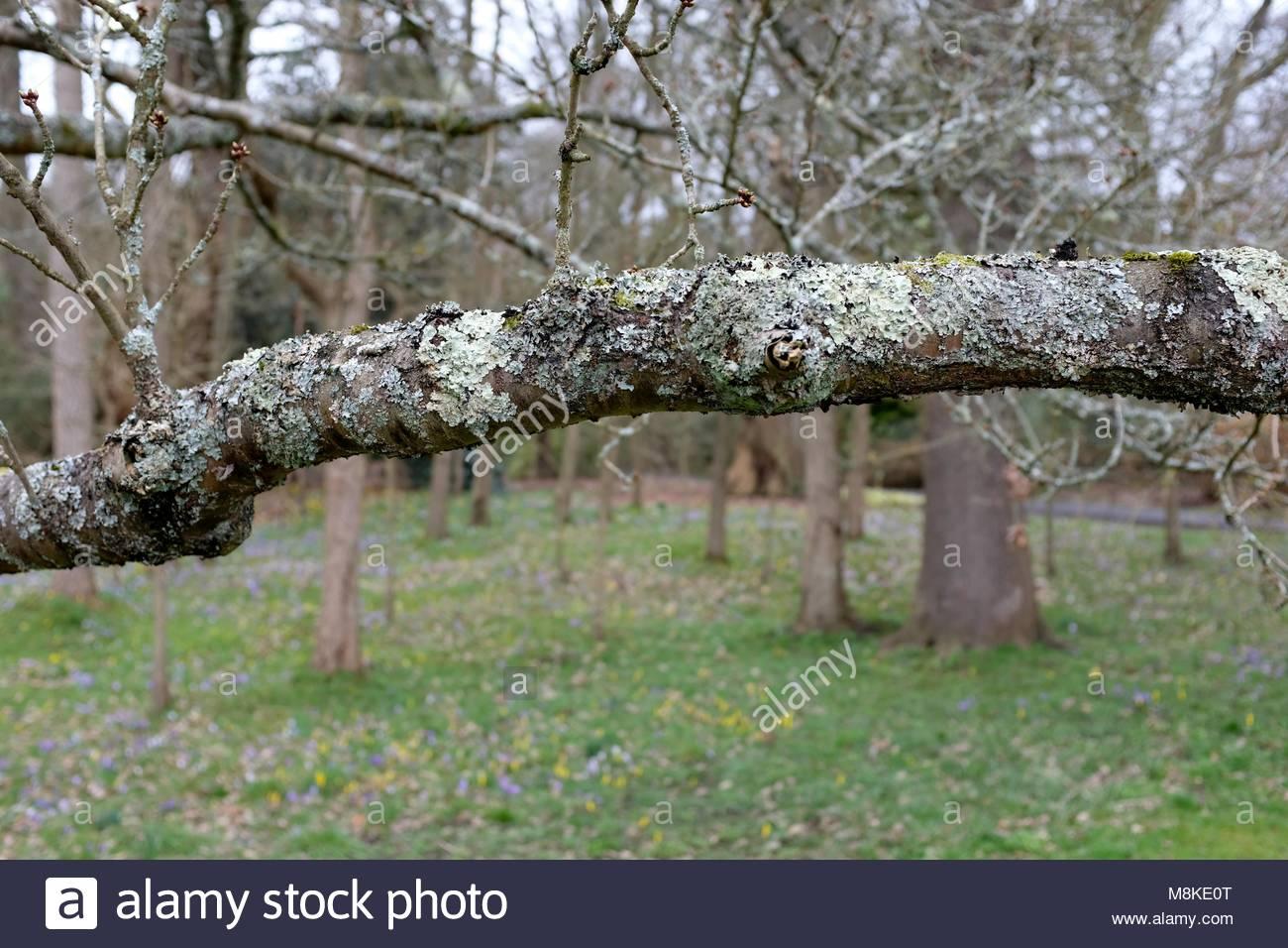 Mottled Bark Stock Photos & Mottled Bark Stock Images - Alamy