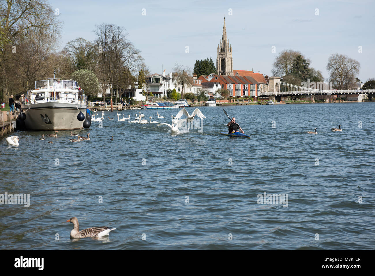 A view of the river at Marlow with an interaction with a boat and some swans Stock Photo