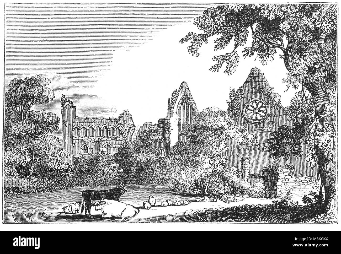 Cattle and sheep in front of Dryburgh Abbey on the banks of the River Tweed in the Scottish Borders. It was nominally - Stock Image