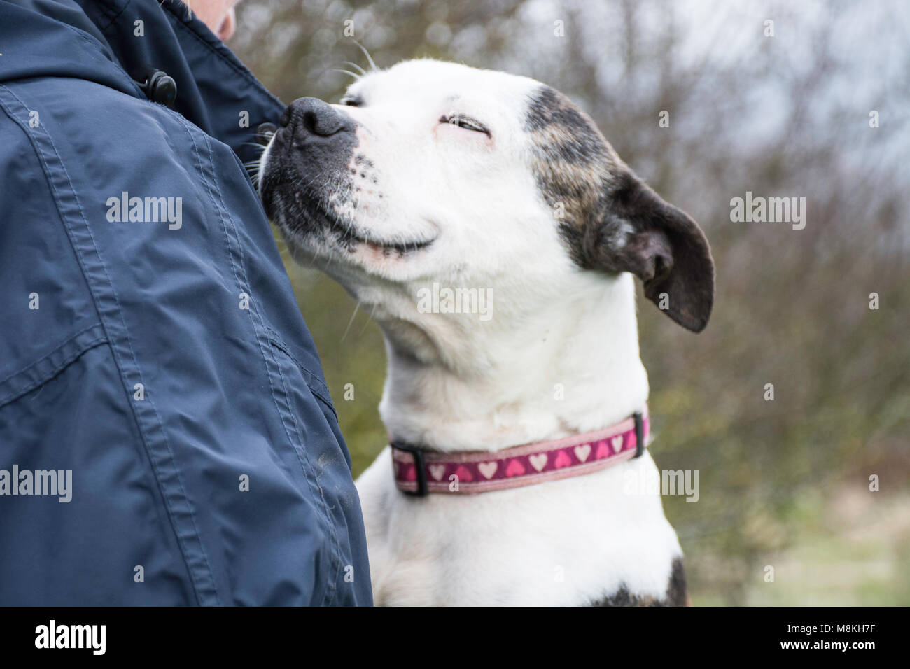 smiling dog - Stock Image