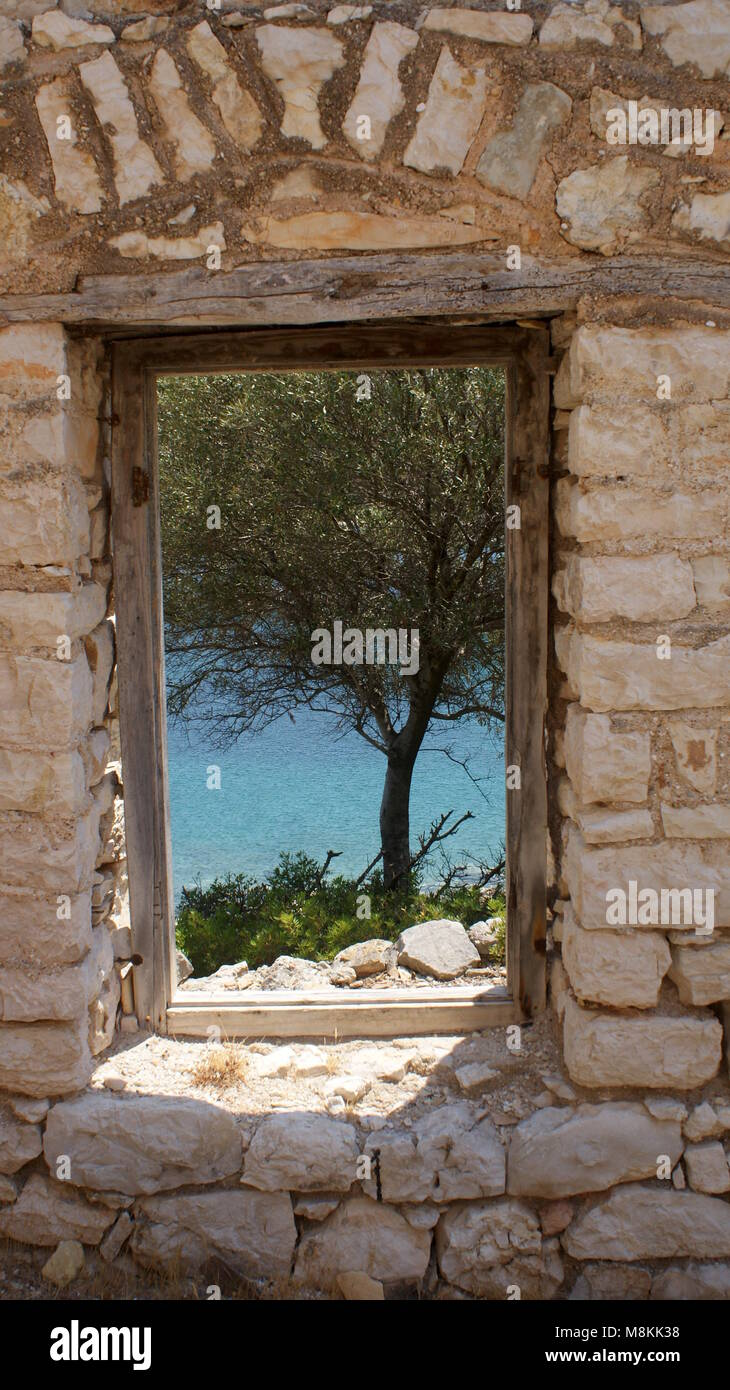 Olive tree viewed from the window of a ruined building. Port Leone, Kalamos, Greece. - Stock Image